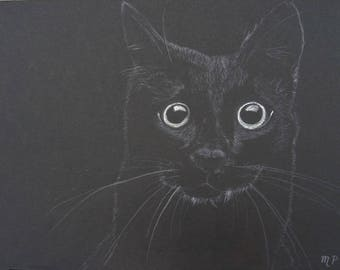Black Cat Colour Pencil Drawing
