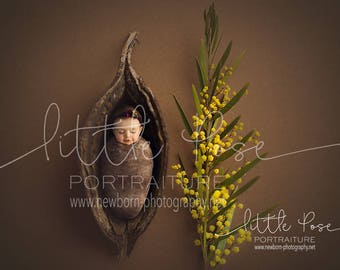 Little Pose ~ Wattle Pod Newborn Digital Background High Res jpg file