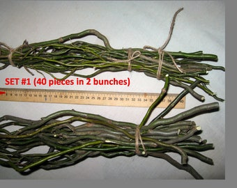 Natural decor willow tree curly branch rustic arrangement wood mantel twigs and twirls _ set of 5