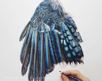 Blue Jay Wing Bird Feathers Broken - Colored Pencil Art Print by Headspace Illustrations