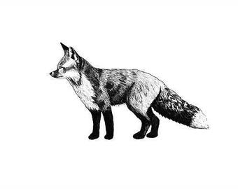 Fox print - mounted