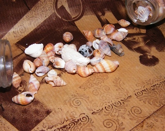 set of 2 Jars with small shells