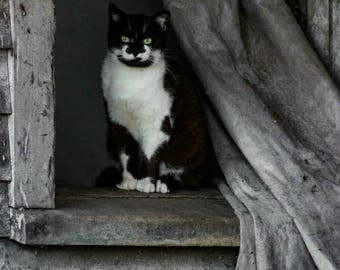 Barn Cat, cat, black and white, barn, photograph, photography