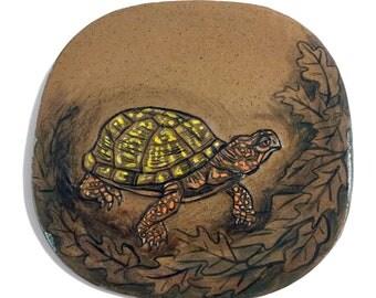 Eastern Box Turtle 1
