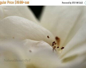 ON SALE NOW White rose print, macro, close up, flower photography, nature photography, garden rose, floral wall art, fine art, rose, nature