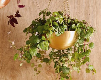 Large Gold Pure Brass Hanging Planter - Air Plant Climbers Succulent Indoor Pot