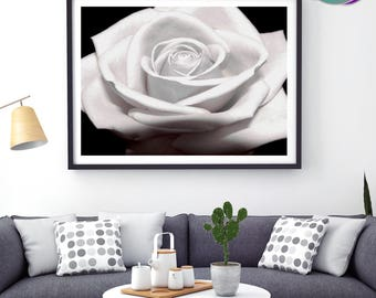 Rose - Art Print- White Rose Head - Flower - Iconic Flower of Love and Romance