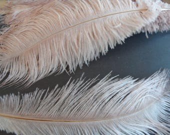 "superb softness, ""champagne"" long 30-40cms 2 feathers."