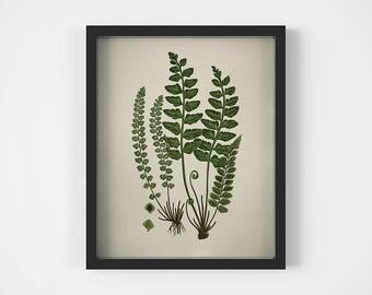 Fern print, Digital botanical print, Fern illustration, Plant prints, Vintage fern print, Wall art printable, Antique botanical print, JPG