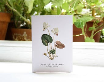 Persian Cyclamen: Greeting Card