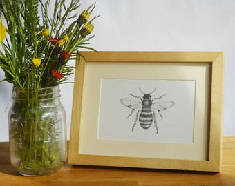 Honey Bee Pencil Drawing - Framed Print