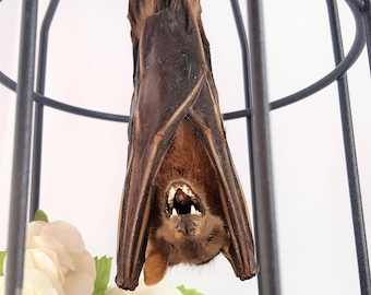 Real Bat in Cage - Taxidermy Mummy Mummified Gothic Vampire