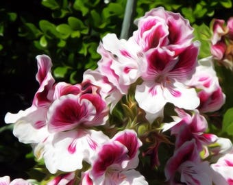 Beautiful Purple Flowers - Digitally Enhanced 8x10 Photo Print