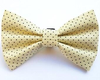 Cream and navy pin dot dog collar bow tie.