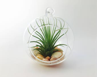Terrarium kit, air plant, tillandsia air plant holder, tillandsia terrarium glass globe glass holder