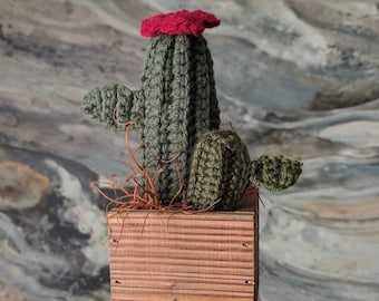Crochet Cacti in Wooden Box