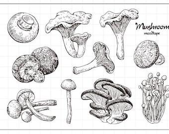 Mushrooms Clear Rubber Stamp Set w/ morel, Shitake, button, toadstool, mushroom, oyster, Chanterelle, Enoki, Portabello, Agaricus