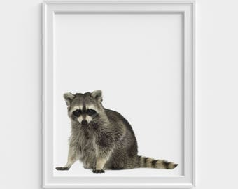 Raccoon Print, Nursery Decor, Nursery Wall Art, Nursery Printable, Raccoon Art, Printable Wall Art, Raccoon Photo, Animal print, Art print