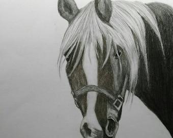 Original horse drawing A3 format