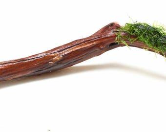 """Live Aquarium Plant Xmas (Christmas) Moss on Manzanita Driftwood - 12""""-14"""""""