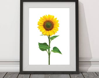 Sunflower, Flower, Bright, Happy, Sunny, Minimalist, Nature, Digital Download, Art, Print, Poster