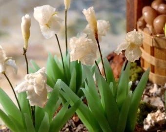 Bearded Iris's 1:12 Scale Miniature Dollhouse Flowers-Any Variety available