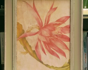 """botanical print """"The water Lily"""""""