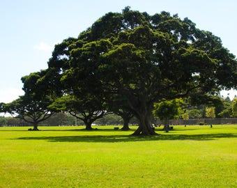 Banyan Tree, HI.