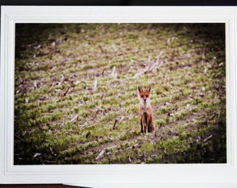 PHOTO GREETING CARD, nature photography, blank card, photo note card, birthday card, special occasion note card, for her as for him, fox