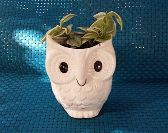 Vintage owl planter with succulent
