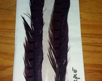 Pheasant Tail Feathers Dyed purple