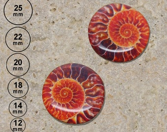 2 print ammonite cabochons are 25 mm, 22 mm, 20 mm, 18 mm, 14 mm, 12 mm
