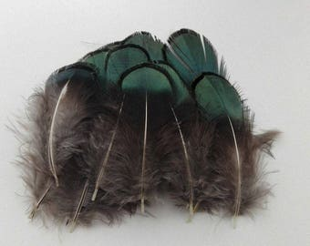 set of 10 natural feathers