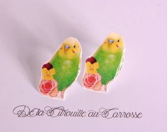 Green and yellow parakeet ear studs