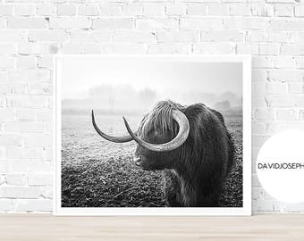 Highland Cow Print, Black and White, Farm Animal Print, Cattle Print, Cow Photography, Scottish Cow Print, Home Decor, Highland Cow Wall Art