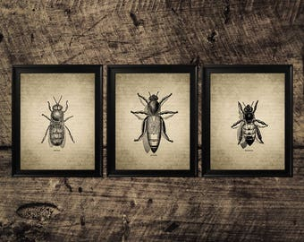 Vintage bee print, printable bee art, insect room decor, bees wall decor, bees instant download