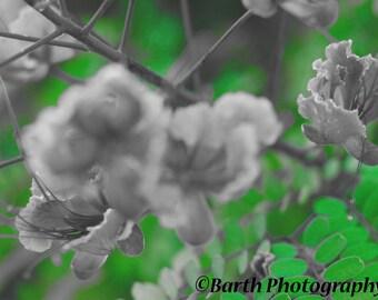 Artistic Photograph-- Flowers