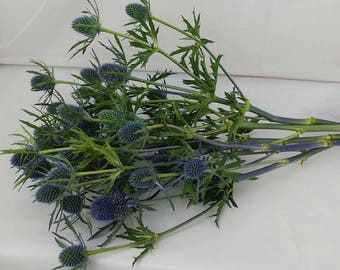 Fresh Blue Thistle, On hand, Blue Thistle, Fresh flowers, Fresh flower bunches, Blue flowers, Thistle, Eryngium, Blue wedding, bulk flowers