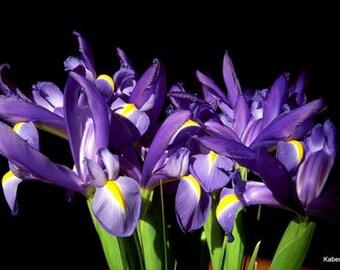 FRESH Iris, Easter Flowers, Flower Project, Wedding Flowers, Real Iris, Blue Iris, Spring Flowers, Fresh Flowers, Spring Wedding, Wedding