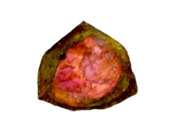 Tourmaline 100% Natural Bi-color Tourmaline Slice 5.20 cts. 13x14 mm Beautiful Loose Gemstone - 3829
