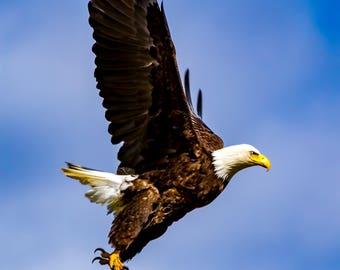 Eagle Taking Flight.
