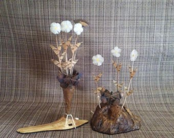 Ring-neck Daisies; driftwood vase in pine knot base