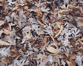 Mini Leaves Print