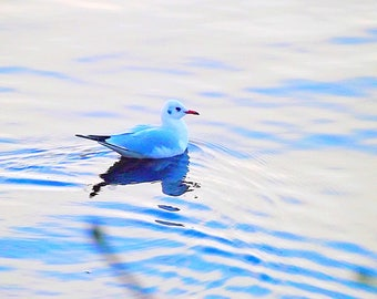 A lone bird.