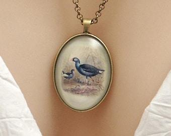 New Zealand Pukeko birds, vintage art print, large oval Picture Pendant, 40x30mm, glass dome pendant, cameo