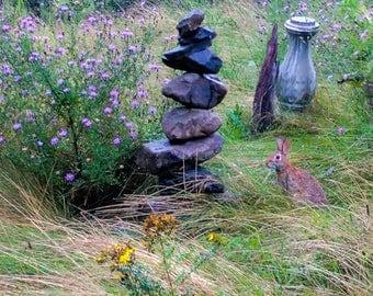 Bunny Near Cairn