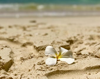 Plumeria on the Beach Photo Print