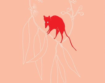 Little Red Antechinus A3 size