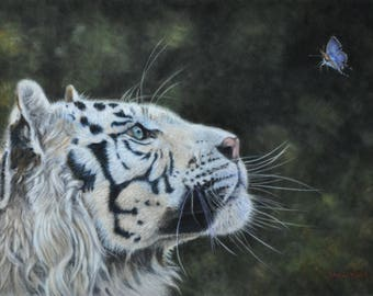 White Tiger Giclee Art Print  Blue Butterfly Pastel Painting