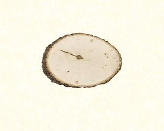 """Basswood Tree Slice, 10""""-11"""" size"""